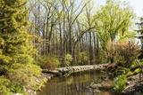 Shades of Green Mark Spring Photographic Print by Richard T. Nowitz