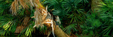 Anhinga (Anhinga Anhinga) on a Tree, Boynton Beach, Florida, USA Photographic Print by  Panoramic Images