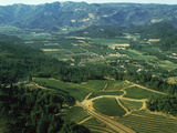 Aerial View of Vineyards in Napa Valley, California, USA Photographic Print by Green Light Collection
