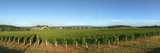 Beaujolais Vineyard, Jully-Les-Buxy, Saone-Et-Loire, Burgundy, France Photographic Print by  Panoramic Images
