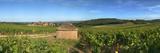 Beaujolais Vineyard, Saules, Saone-Et-Loire, Burgundy, France Lámina fotográfica por Panoramic Images,