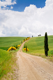 Path with Cypress Trees in Field, San Quirico D'Orcia, Val D'Orcia, Siena Province, Tuscany, Italy Photographic Print by Green Light Collection