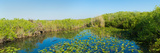 Lily Pads in the Lake, Anhinga Trail, Everglades National Park, Florida, USA Photographic Print by  Panoramic Images