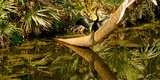 Oriental Darter (Anhinga Melanogaster) Anhinga on a Tree, Boynton Beach, Florida, USA Photographic Print by  Panoramic Images
