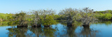 Reflection of Trees in a Lake, Anhinga Trail, Everglades National Park, Florida, USA Photographic Print by  Panoramic Images