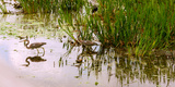 Reflection of Cranes on Water, Boynton Beach, Florida, USA Photographic Print by  Panoramic Images