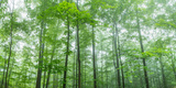 Trees in a Forest, Hamburg, New York State, USA Fotografie-Druck von  Panoramic Images