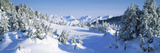 Trees on a Snow Covered Landscape, Chugach Mountains, Alaska, USA Photographic Print by  Panoramic Images