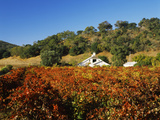 Winery in a Vineyard, Pagani Ranch, Sonoma, California, USA Photographic Print by Green Light Collection