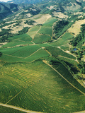 Aerial View of Vineyards in Sonoma Valley, California, USA Photographic Print by Green Light Collection
