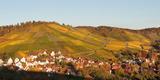 Vineyards in Autumn, Uhlbach, Stuttgart, Baden-Wurttemberg, Germany Lámina fotográfica por Panoramic Images,