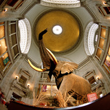 Interiors of a Museum, National Museum of Natural History, the Mall, Washington Dc, USA Photographic Print by Green Light Collection