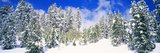 Pine Trees on a Snow Covered Hill, Breckenridge, Summit County, Colorado, USA Fotodruck von  Panoramic Images