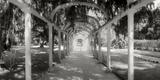 Pathway in a Botanical Garden, Jardim Botanico, Zona Sul, Rio De Janeiro, Brazil Photographic Print by  Panoramic Images