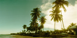 Palm Trees on the Beach in Morro De Sao Paulo, Tinhare, Cairu, Bahia, Brazil Photographic Print by  Panoramic Images