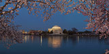 Cherry Blossom Tree with a Memorial in the Background, Jefferson Memorial, Washington Dc, USA Photographic Print by  Panoramic Images