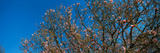 Low Angle View of Cherry Trees, Frankfort, Kentucky, USA Photographic Print by  Panoramic Images