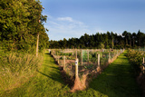 Allotment Near the Wonderful Barn, Celbridge, County Kildare, Ireland Photographic Print by Green Light Collection