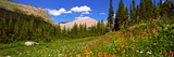 Wild Flowers, Iceberg Lake, Us Glacier National Park, Montana, USA Photographic Print by  Panoramic Images