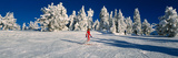 Person Skiing in Snow Covered Landscape Photographic Print by  Panoramic Images