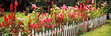 Fence with Flowers in a Garden, Coupeville, Whidbey Island, Island County, Washington State, USA Photographic Print by  Panoramic Images