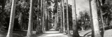 Trees Both Sides of a Garden Path, Jardim Botanico, Zona Sul, Rio De Janeiro, Brazil Photographic Print by  Panoramic Images