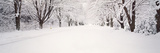 Snow Covered Road in Winter, Holland, Michigan, USA Photographic Print by  Panoramic Images