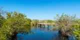 Anhinga Trail Boardwalk, Everglades National Park, Florida, USA Photographic Print by  Panoramic Images