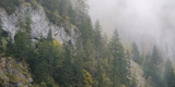 Pine Trees on a Hill, Lauterbrunnen, Interlaken-Oberhasli, Bern, Switzerland Photographic Print by  Panoramic Images
