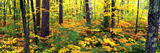 Trees in Autumn, Copper Falls State Park, Mellen, Ashland County, Wisconsin, USA Photographic Print by  Panoramic Images