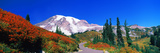 Trees on a Hill, Mt Rainier, Mount Rainier National Park, Pierce County, Washington State, USA Photographic Print by  Panoramic Images
