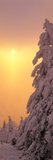 Snow Covered Tree in Winter at Sunset, Feldberg Mountain, Black Forest, Baden-Wurttemberg, Germany Photographic Print by  Panoramic Images