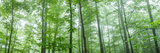 Trees in a Forest, Hamburg, New York State, USA Photographic Print by  Panoramic Images