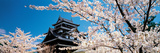 Matsue Castle Cherry Blossoms Shimane Japan Photographic Print by  Panoramic Images