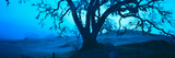 Silhouette of Oaks Trees, Central Coast, California, USA Photographic Print by  Panoramic Images