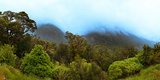 Tree with Mountain Range in the Background, Fiordland National Park, South Island, New Zealand Photographic Print by  Panoramic Images