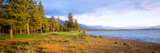 Trees in a Golf Course, Edgewood Tahoe Golf Course, Stateline, Nevada, USA Reproduction photographique par  Panoramic Images