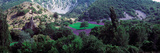 Cherry Trees in Lavender Field, Provence-Alpes-Cote D'Azur, France Photographic Print by  Panoramic Images