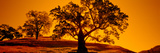 Silhouette of California Oaks Trees, Central Coast, California, USA Photographic Print by  Panoramic Images