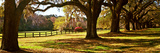 Trees in a Garden, Boone Hall Plantation, Mount Pleasant, Charleston, South Carolina, USA Fotografie-Druck von  Panoramic Images