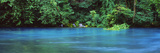 Forest at the Riverside, Big Spring, Ozark National Scenic Riverways, Missouri, USA Photographic Print by  Panoramic Images