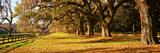Trees in Garden, Boone Hall Plantation, Mount Pleasant, Charleston, South Carolina, USA Fotodruck von  Panoramic Images