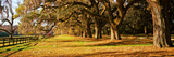 Trees in Garden, Boone Hall Plantation, Mount Pleasant, Charleston, South Carolina, USA Photographic Print by  Panoramic Images