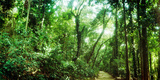 Trees Along Pathway in the Botanical Garden, Jardim Botanico, Zona Sul, Rio De Janeiro, Brazil Photographic Print by  Panoramic Images