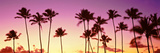 Low Angle View of Palm Trees, Waikiki Beach, Honolulu, Oahu, Hawaii, USA Photographic Print by  Panoramic Images