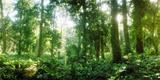 Trees in a Garden, Jardim Botanico, Zona Sul, Rio De Janeiro, Brazil Photographic Print by  Panoramic Images