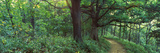 Pathway in a Forest, Mississippi River, Wisconsin, USA Photographic Print by  Panoramic Images