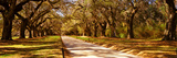 Trees in a Garden, Boone Hall Plantation, Mount Pleasant, Charleston, South Carolina, USA Photographie par  Panoramic Images