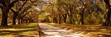 Trees in a Garden, Boone Hall Plantation, Mount Pleasant, Charleston, South Carolina, USA Fotografie-Druck von  Panoramic Images