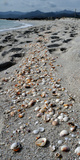 Shells on the Beach, La Cinta Beach, San Teodoro, Province of Olbia-Tempio, Sardinia, Italy Photographic Print by  Panoramic Images